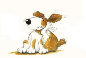 Allergy dog
