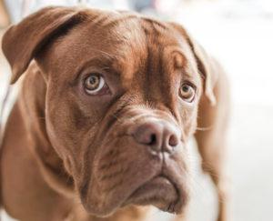 brown dog 2
