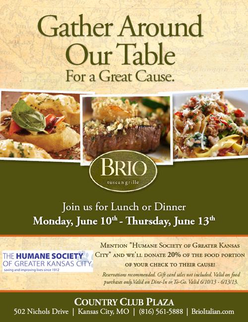Brio Days Fundraiser For Hsgkc 4paws