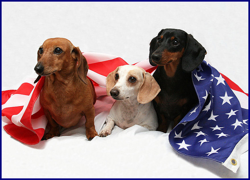 Closed Memorial Day 4paws